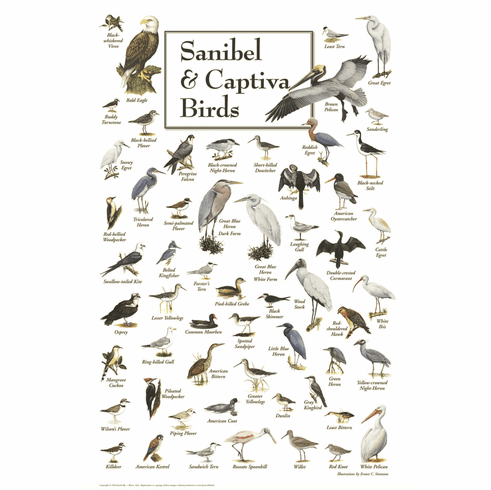 Sanibel & Captiva Birds