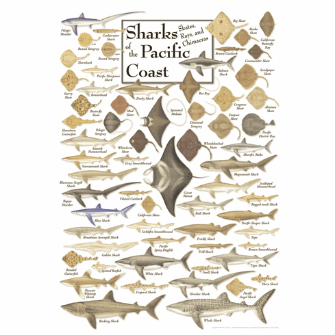 Sharks of the Pacific Coast