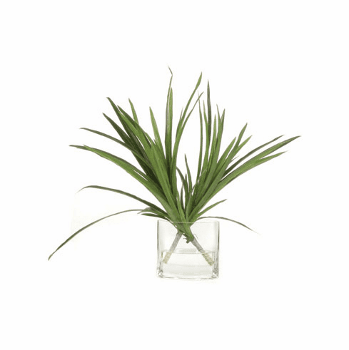 Small Tree Dracena Waterlike