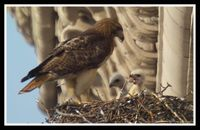 Mother & Two Chicks, 2003