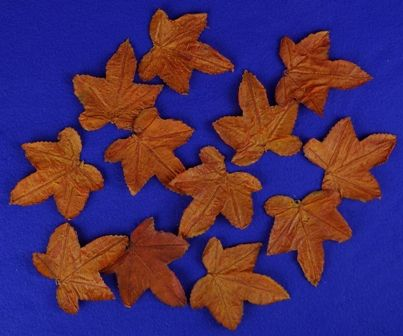 Maple Leaves 12pc
