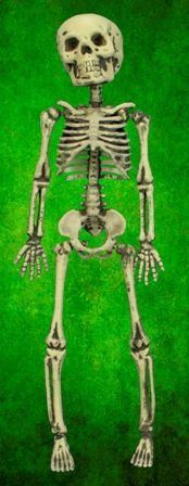 Skeleton Halloween Decoration. Size 12 Inch.