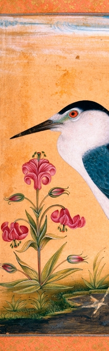 A Night Heron Bookmark