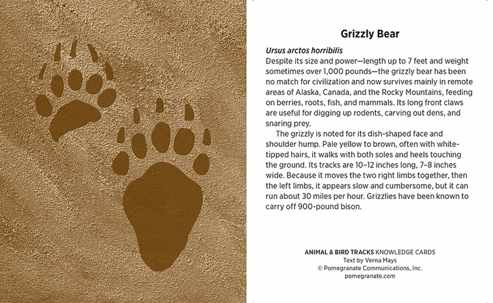 Animal & Bird Tracks: A Handy Reference for the Outdoor Detective Knowledge Cards