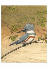 Belted Kingfisher Birthday Card