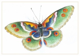 Butterfly Small Boxed Cards