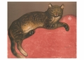 Cat on a Cushion Postcard
