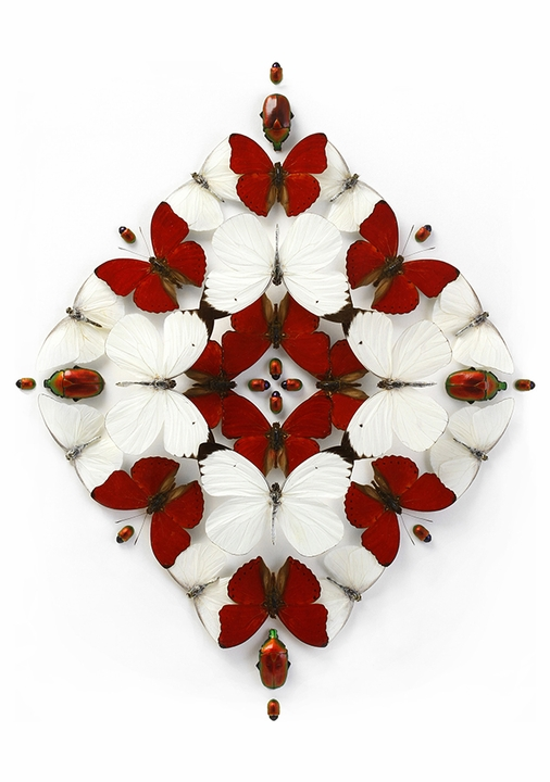Christopher Marley: Crimson Inflorescence Holiday Cards