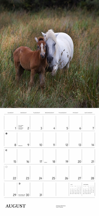 Equus: Photographs by Susan Friedman 2021 Wall Calendar