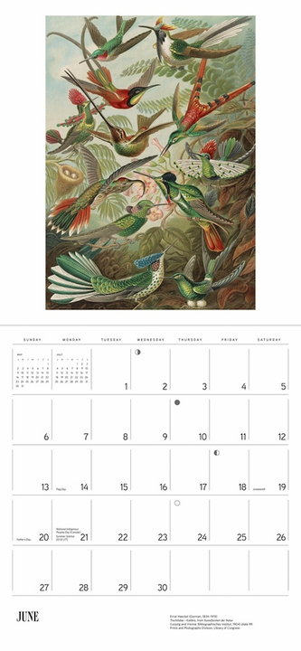 Ernst Haeckel: Art Forms in Nature 2021 Wall Calendar