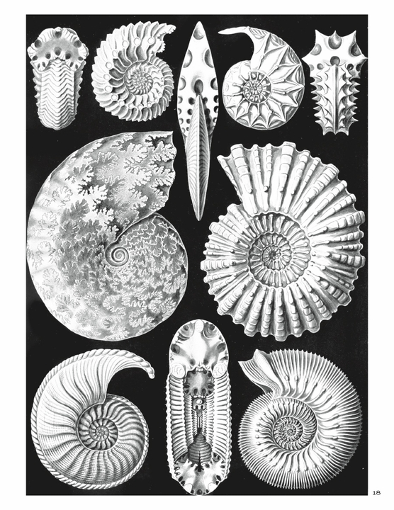 Ernst Haeckel: Art Forms in Nature Coloring Book
