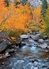 Fall Color along Bishop Creek, Inyo National Forest Notecard