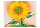 Georgia O'Keeffe: A Sunflower from Maggie Small Boxed Cards