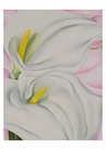 Georgia O'Keeffe: Two Calla Lilies on Pink Small Boxed Cards