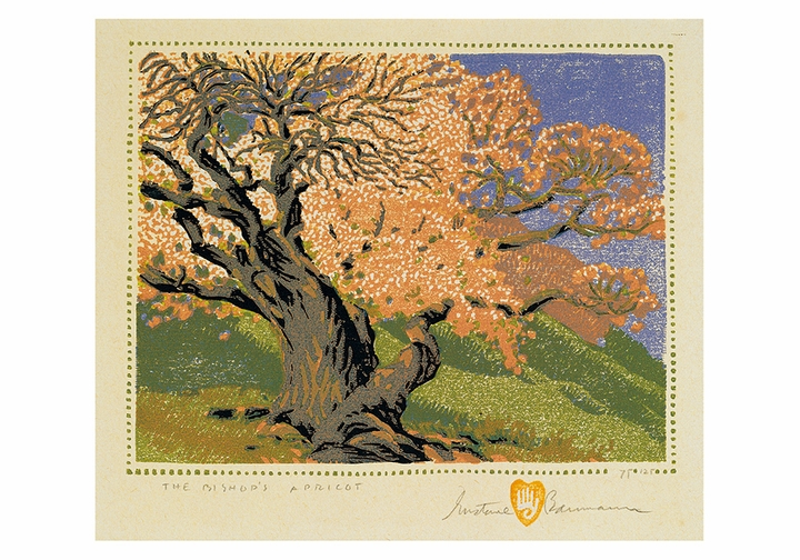 Gustave Baumann: The Bishop's Apricot Small Boxed Cards