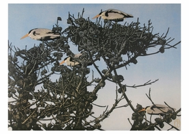 Heron Nests Notecard