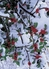Holly Branches in Snow Holiday Cards