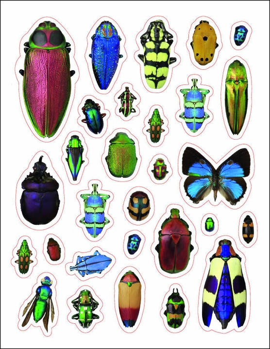 Incredible Insects Sticker Book