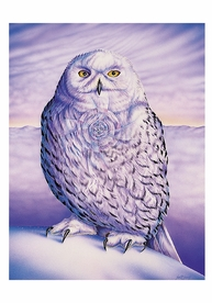 Judith Sparks: Snowy Owl Small Boxed Cards