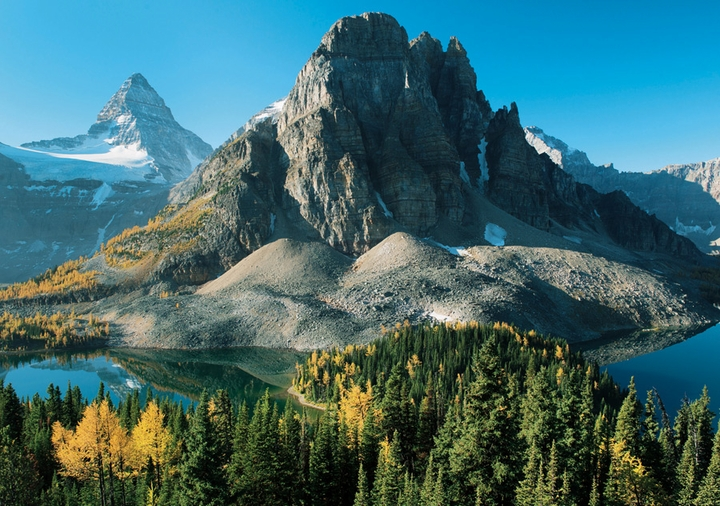 Larch Trees in Autumn below Mount Assiniboine Notecard