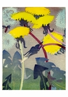 Mabel Royds: Dandelions Boxed Small Notecards