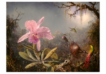 Martin Johnson Heade: Orchid and Three Hummingbirds Notecard