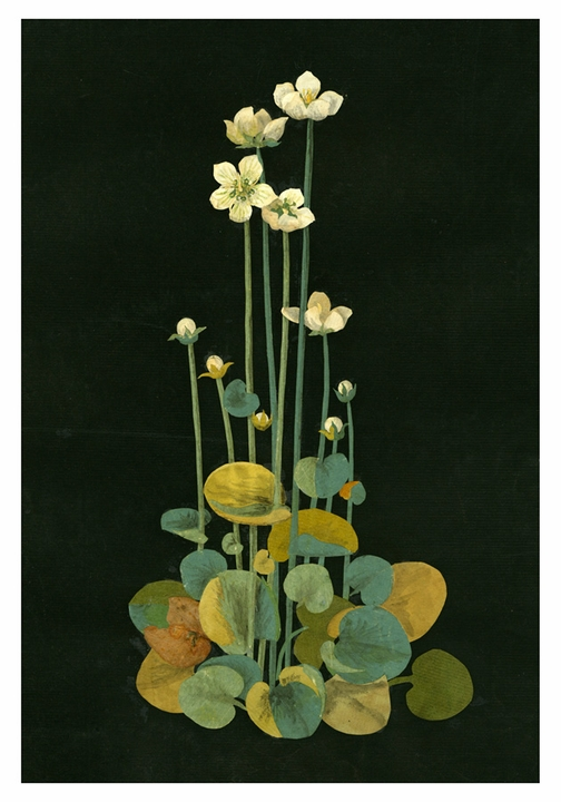 Mary Delany: Grass of Parnassus Boxed Small Notecards