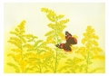 Maurice R. Bebb: Goldenrod and Red Admiral Small Boxed Cards
