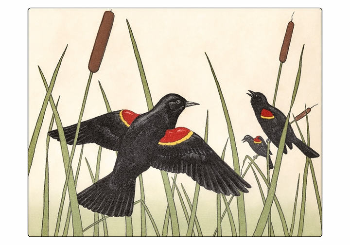 Maurice R. Bebb: Red-winged Blackbirds Boxed Small Notecards