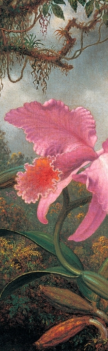 Orchid and Hummingbird Bookmark