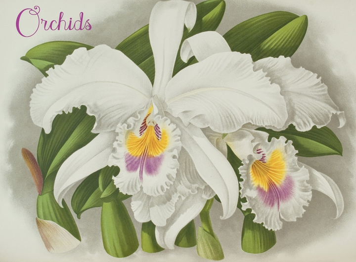 Orchids Boxed Notecards