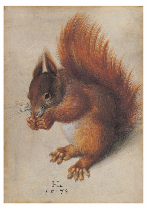 Hans Hoffmann: Red Squirrel Notecard