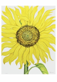 Rosalind Wise: Sunflower Birthday Card