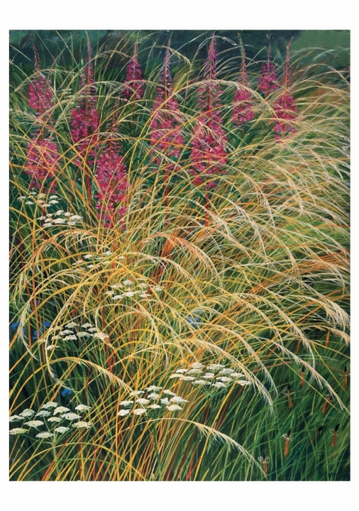 Rosebay Willowherb with Dried Grasses Notecard