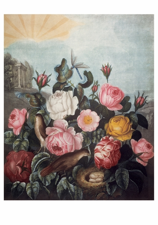 Robert John Thornton: Roses Notecard