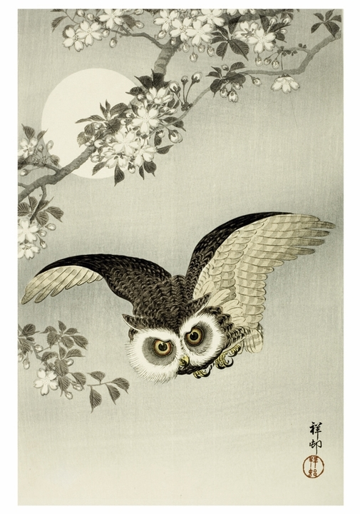 Ohara Shōson: Scops Owl, Cherry Blossoms and Moon Notecard