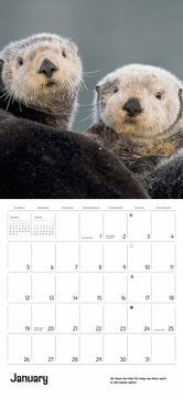 Sea Otters 2020 Wall Calendar