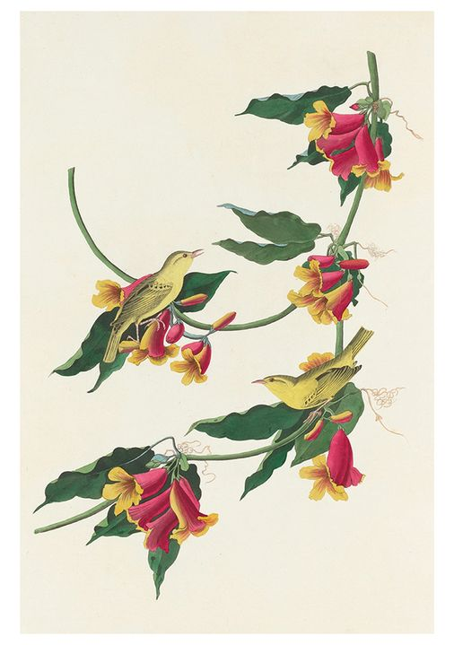 Songbirds Boxed Notecards