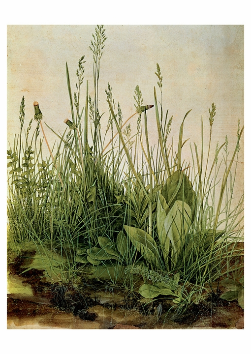 Albrecht Dürer: The Great Piece of Turf Postcard