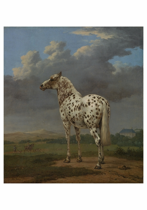 "Paulus Potter: The ""Piebald"" Horse Notecard"