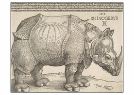 Albrecht Dürer: The Rhinoceros Postcard