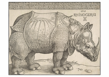 The Rhinoceros Postcard