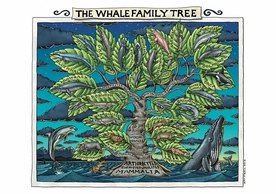The Whale Family Tree Notecard