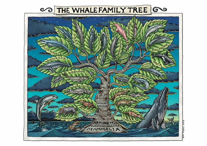 Ray Troll: The Whale Family Tree Notecard