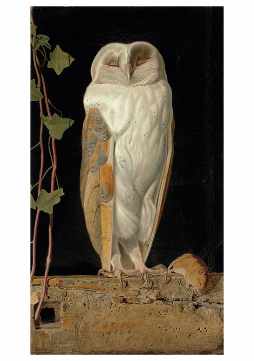 William J. Webbe: The White Owl Notecard