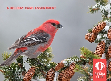 Winter Birds Holiday Card Assortment