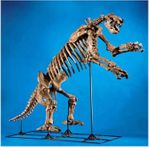 Eremotherium Laurillardi Giant Ground Sloth Skeleton -DISARTICULATED