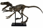 Raptor Skeleton Fossil Sculpture, 32""
