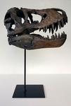 T-rex Skull with Stand