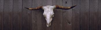 National Geographic Cattle Skull on Wooden Wall Rear Window Decal